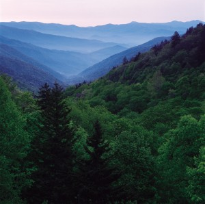 Great Smoky Mountains National Park is a major focus of Wilderness Wildlife Week.