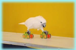 roller skating bird-8
