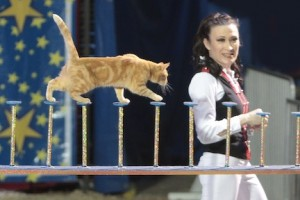 trained cats at Comedy Barn-3
